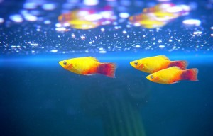 fish-collection-4-web